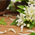 Jasmine: How to Grow