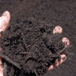 Organic Compost-uses, benefits and how to make organic compost
