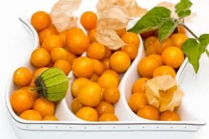 Chinese-lantern-plant-fruits