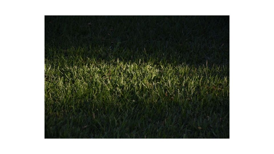 when does grass grow, day or night?