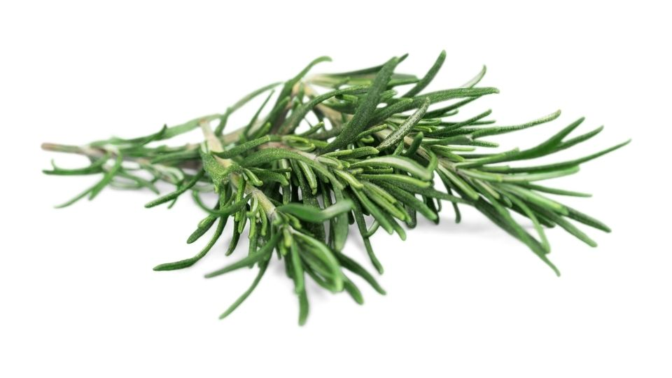 rosemary turning brown solution