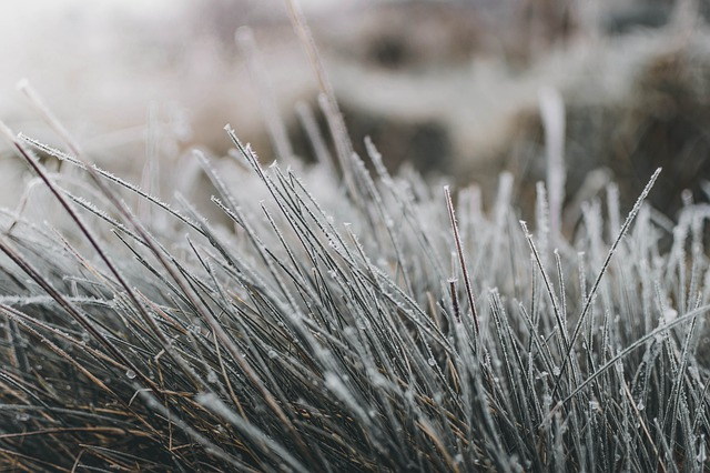 can grass grow in winter?
